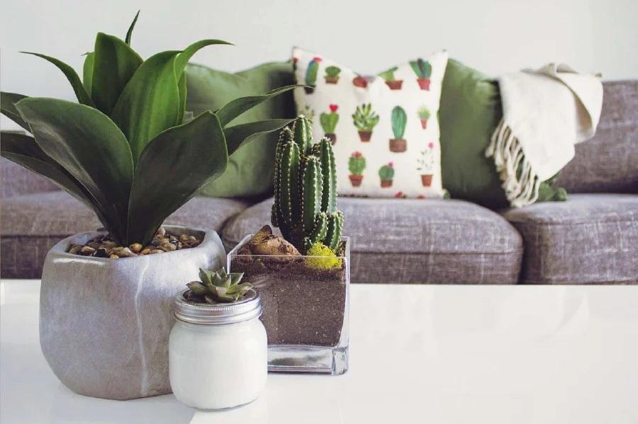 cactus in bedroom