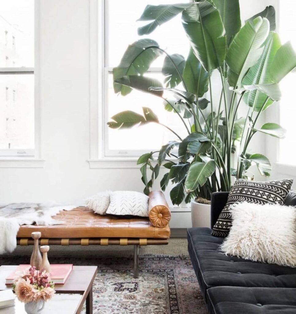 floor plants
