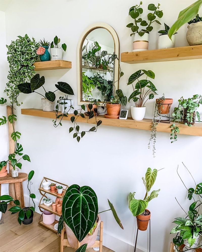 plant decor with collection