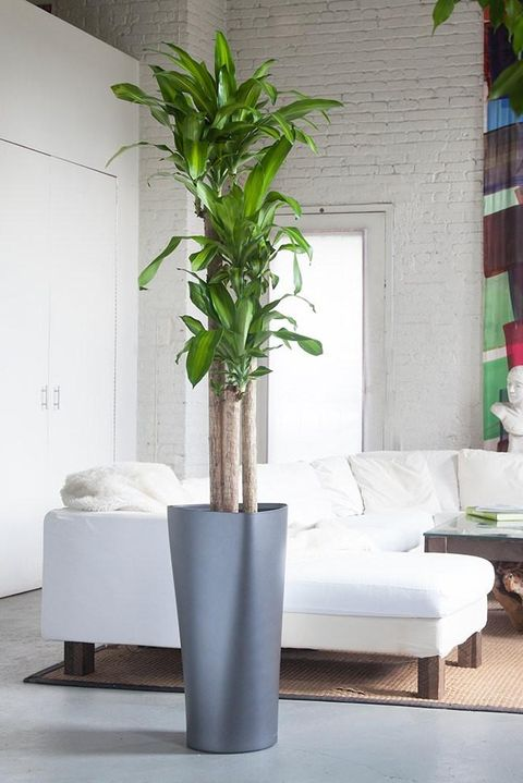 stand-alone plant in room