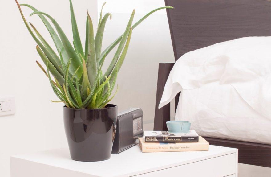 aloe vera interior design online courses