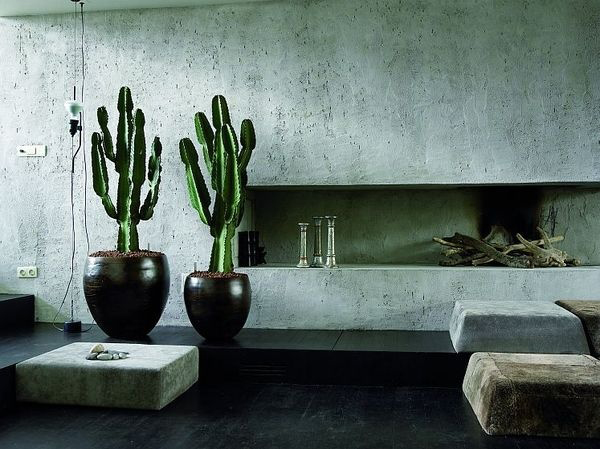 cactus in living room online courses