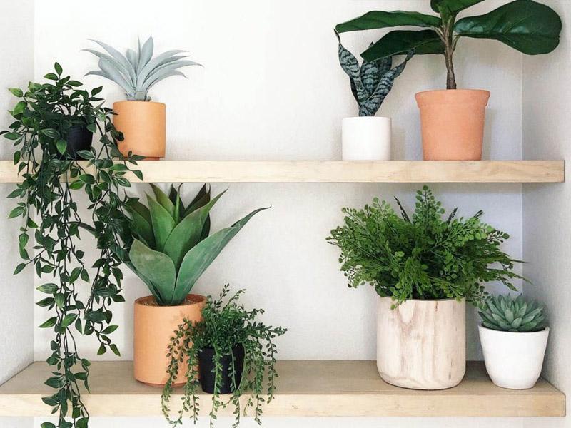 fake plants at home