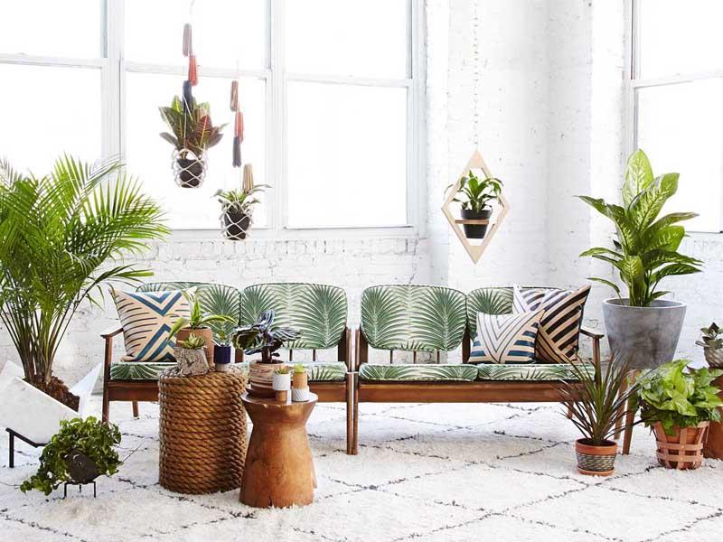 plant interior design for home
