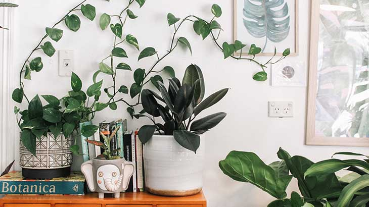 Best Home Décor Plants with Hunar Online